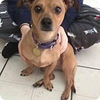 Adopt A Pet :: Herman - Oak Ridge, NJ