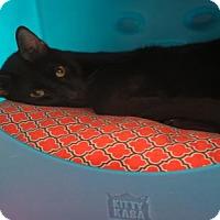 Adopt A Pet :: BOO BOO - West Palm Beach, FL