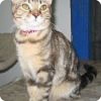 Adopt A Pet :: Lisha - Powell, OH