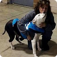 Adopt A Pet :: PRINCESS - Elyria, OH