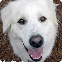 Adopt A Pet :: Oahu - new! - Beacon, NY