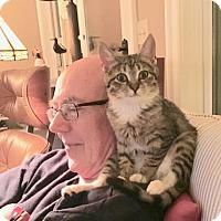 Adopt A Pet :: June Bug - Washington, VA