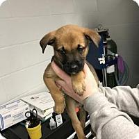 Adopt A Pet :: Kaboodle - Paducah, KY