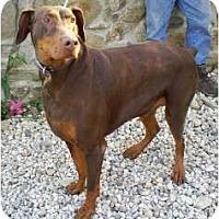 Adopt A Pet :: Neiko - Fillmore, CA