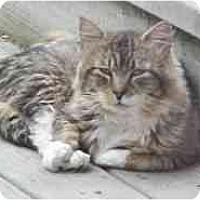 Adopt A Pet :: Scoops - Lunenburg, MA