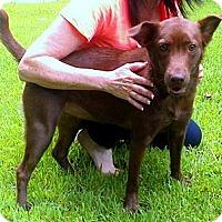 Adopt A Pet :: Ruby - Raleigh, NC