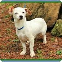 Adopt A Pet :: Long John Silver (In New Eng.) - Brattleboro, VT