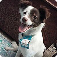 Adopt A Pet :: Sheriff - Hancock, MI