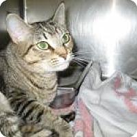 Adopt A Pet :: Gabby - Springdale, AR