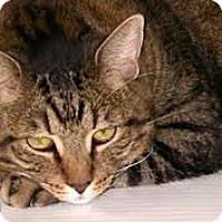 Adopt A Pet :: Thelma - Lancaster, MA