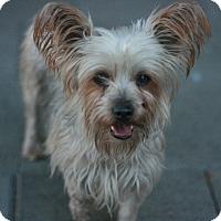 Adopt A Pet :: Sophie - Canoga Park, CA