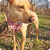 Adopt A Pet :: Arcanine - Converse, TX