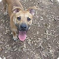 Adopt A Pet :: Jill - Fair Oaks Ranch, TX