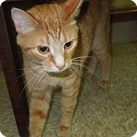 Adopt A Pet :: Checkers - Medina, OH