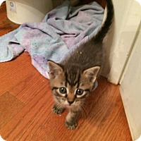 Adopt A Pet :: Sprout - Woodstock, GA
