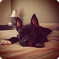Adopt A Pet :: Rue - Houston, TX