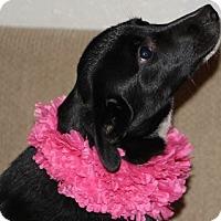 Adopt A Pet :: Shelby - Avon, NY