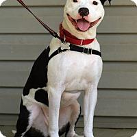 Adopt A Pet :: Eli - Joy Rider! - Caldwell, NJ