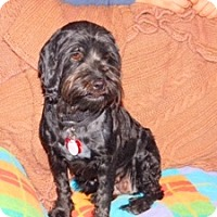Adopt A Pet :: Sweetie - Parker, CO