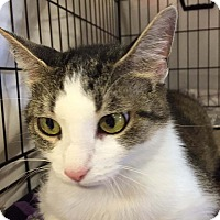 Adopt A Pet :: Jackie - Lombard, IL