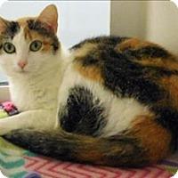 Adopt A Pet :: Peanut - Topeka, KS