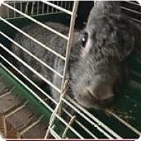 Adopt A Pet :: Rosie - Egg Harbor City, NJ