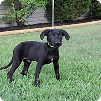 Adopt A Pet :: Tate - New Oxford, PA