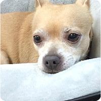 Adopt A Pet :: Leo - Huntington, NY