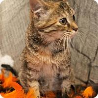 Adopt A Pet :: Mookee - Muskegon, MI
