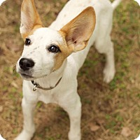 Adopt A Pet :: Dexter Two - Washington, DC