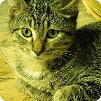 Adopt A Pet :: Ashe - Montgomery City, MO