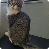 Adopt A Pet :: Aries Jr. (AJ) - Pleasanton, CA