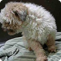 Adopt A Pet :: URGENT on 12/12 BIG BEAR - San Bernardino, CA