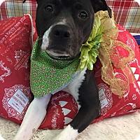 Adopt A Pet :: Dinah - Flint, MI