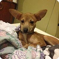 Adopt A Pet :: Fawn - Lewistown, PA