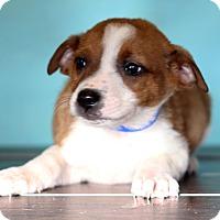 Adopt A Pet :: Jose - Waldorf, MD
