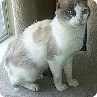 Adopt A Pet :: Purrcilla - Tunica, MS