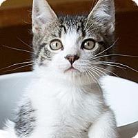Adopt A Pet :: Lizzie - Irvine, CA