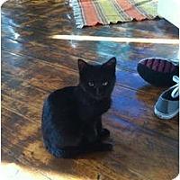 Adopt A Pet :: Cricket - Portland, ME