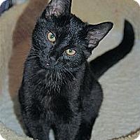 Adopt A Pet :: Coco - Victor, NY