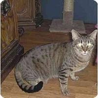 Adopt A Pet :: Dusty - Summerville, SC