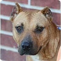 Adopt A Pet :: Hank - kennebunkport, ME