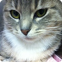 Adopt A Pet :: Kelsey - Trevose, PA