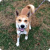 Adopt A Pet :: Sako - Manassas, VA
