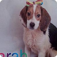 Adopt A Pet :: Sarah - Delaware, OH