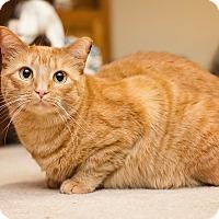 Adopt A Pet :: Blossom - Fredericksburg, VA