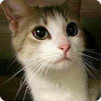 Adopt A Pet :: Alva - Chattanooga, TN