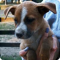 Adopt A Pet :: Daryl - Pewaukee, WI