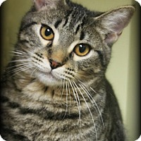 Adopt A Pet :: Gos - Spring, TX