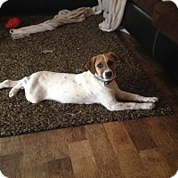 Adopt A Pet :: Milo - Huntsville, TN
